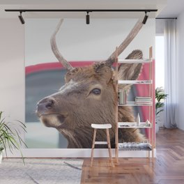 Watercolor Elk Juvenile 03, Estes Park, Colorado, Forde tough Wall Mural