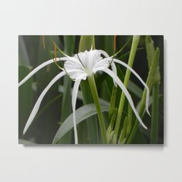 """""""Lily (i)"""" by ICA PAVON Metal Print"""