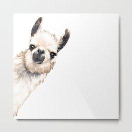 Sneaky Llama White Metal Print
