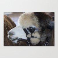 alpaca Canvas Prints featuring Alpaca by Deborah Janke