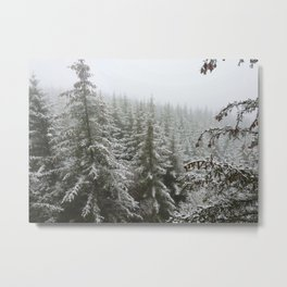 Frosty Forest Metal Print