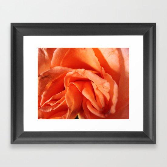 Rosa Vieja Framed Art Print