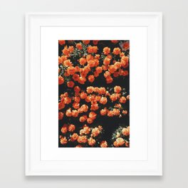 Orange flower fleurs Framed Art Print