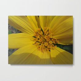 Balsam Root Flower Metal Print