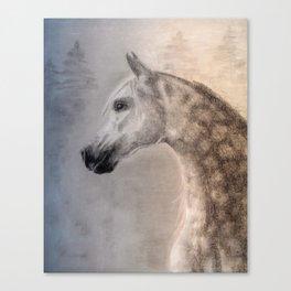 Arabian Horse Art Print Canvas Print