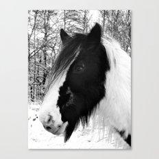Horse. Black+White.Snow. Canvas Print