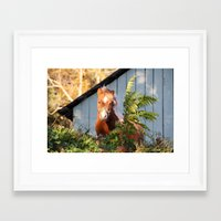 pony Framed Art Prints featuring Pony by Linda Fields