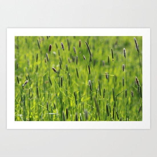 Grasses  - JUSTART © Art Print