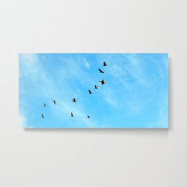 Cormorant flock Fly-over Metal Print
