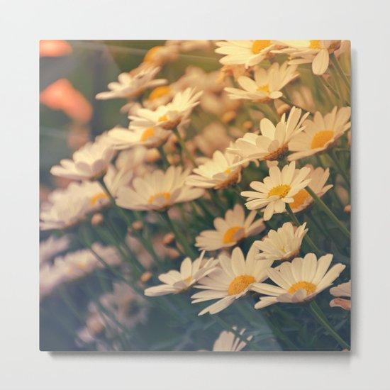 White daisy sunrise effect Metal Print
