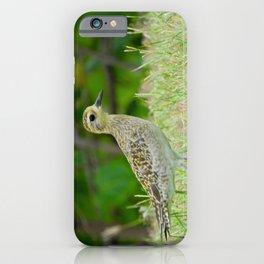 Pacific Golden Plover iPhone Case