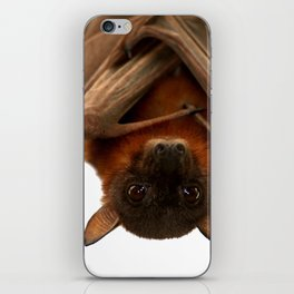 Little Red Flying Fox Hanging Out  iPhone Skin