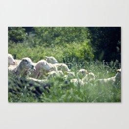 Ewe Are Sheep Canvas Print