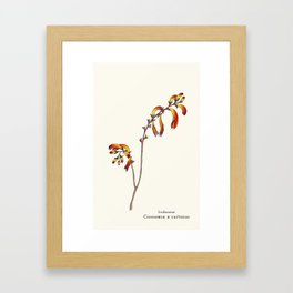 Ligne claire 2: Crocosmia x curtonus Framed Art Print