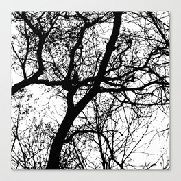 Branches 2 Canvas Print