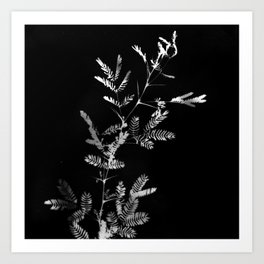 Meshes of the afternoon Art Print