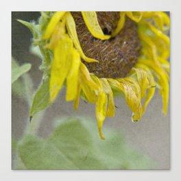Flower of the Sun Canvas Print