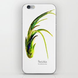 Tillandsia Paucifolia Air Plant Watercolors iPhone Skin