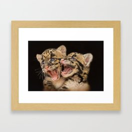 CLOUDED LEOPARD CUBS LOVE Framed Art Print