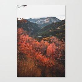 meadow glow Canvas Print