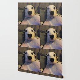 Skeptical Dalmatian Wallpaper