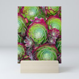 Aeoniums Mini Art Print