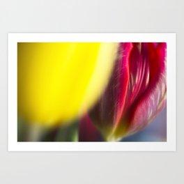 Floral - Tulip Detail Art Print