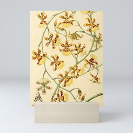 Flower 030 oncidium sphacelatum Scorched Oncidium26 Mini Art Print