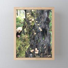 Trail of Puffballs Framed Mini Art Print