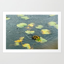 Swimming Duckling Art Print
