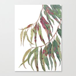 A touch of red - watercolour of eucalyptus branch Canvas Print