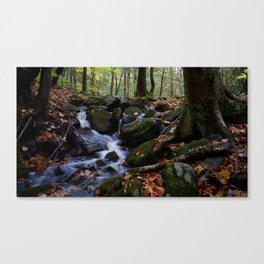 Autumn Forest Stream IV Canvas Print