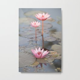 Three Lotus Flowers Metal Print