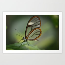 Clearly  Art Print