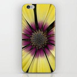 Yellow Calendula iPhone Skin
