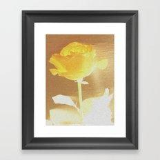 Sunshine Rose Framed Art Print