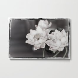 Lovely Water Lily Metal Print