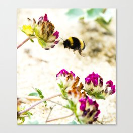 the flight of bumble bee on the dunes I Canvas Print