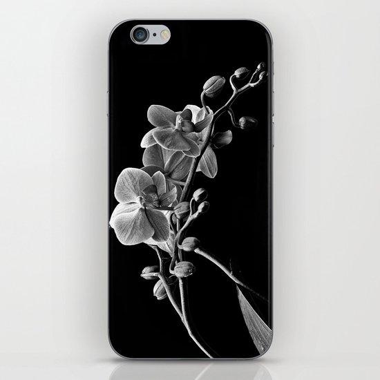 Dendrobium iPhone & iPod Skin