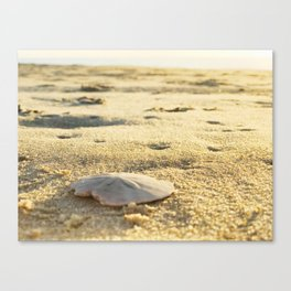 Sunrise Sand Dollar Canvas Print