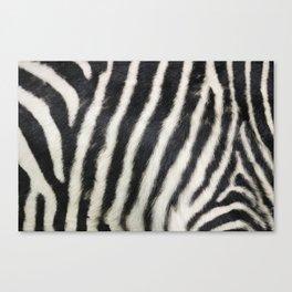 Zebra print Canvas Print