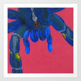 Peacock Tarantula Art Print