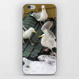 Brawling Gulls (4) iPhone Skin