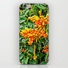 Spectacular orange trumpet flower iPhone & iPod Skin