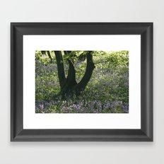 Wild Bluebells in ancient woodland. Wayland Wood, Norfolk, UK. Framed Art Print
