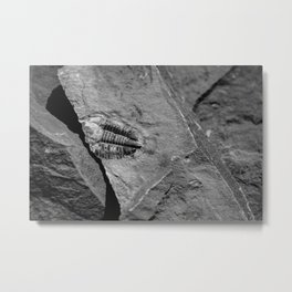 Utah - Trilobite Fossil Crack Metal Print