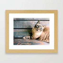 Kool Kitty Framed Art Print