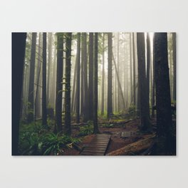 Rainforest of the Pacific Northwest Canvas Print