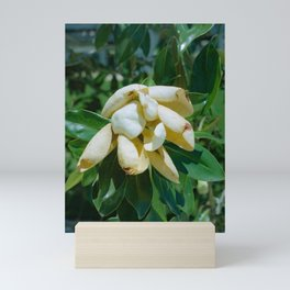 """Flower I"" color still life film photo Mini Art Print"