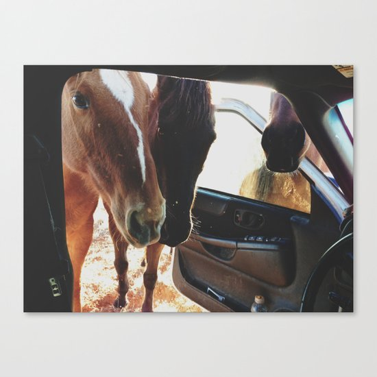 Car Horses Canvas Print